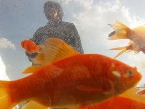 Hoe moet je een aquarium schoonmaken?