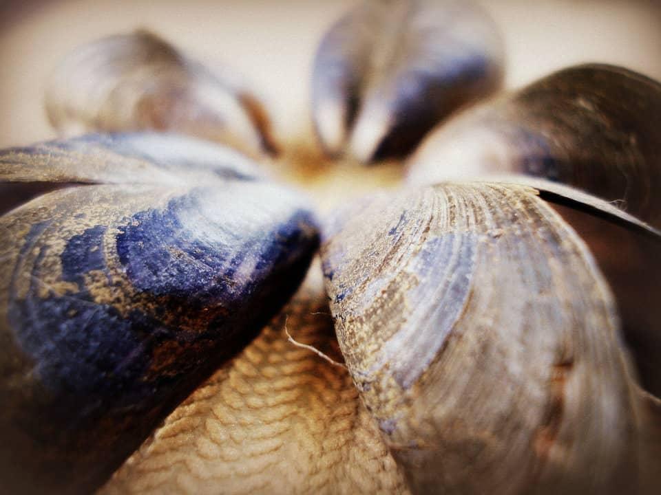 Zeeuwse Mosselen klaar maken